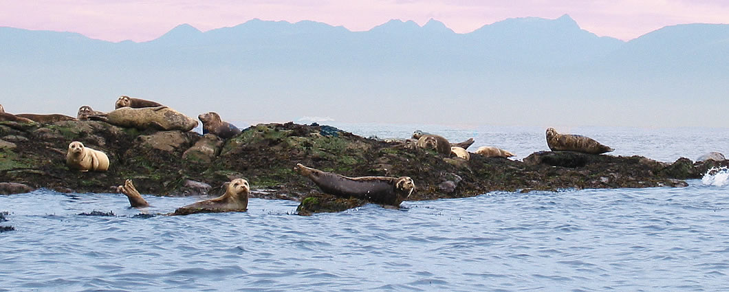 seals in the san juan islands