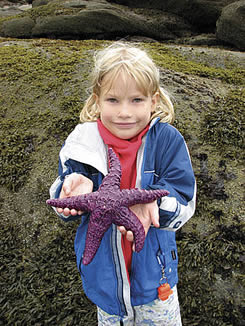 sea stars san juan island sailing tours from bellingham
