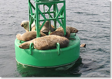 sea lions sail the san juans crewed sailing charters