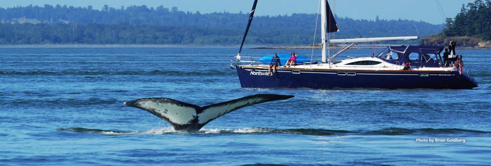 humpback whale san juan yacht charters
