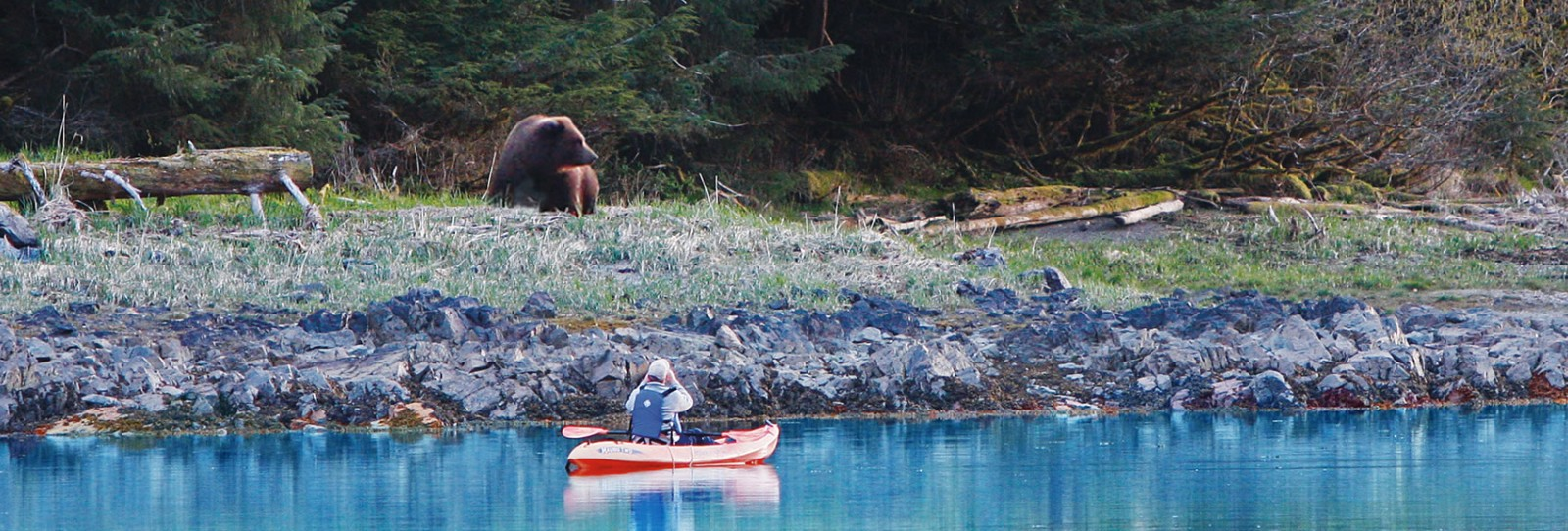 sailing the inside passage - brown bear and kayak