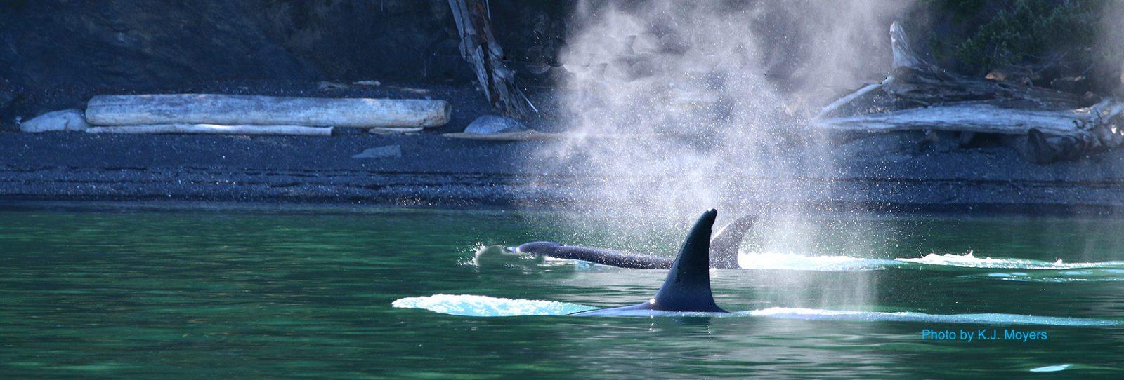Orca Spray San Juan Islands Sailing Charters